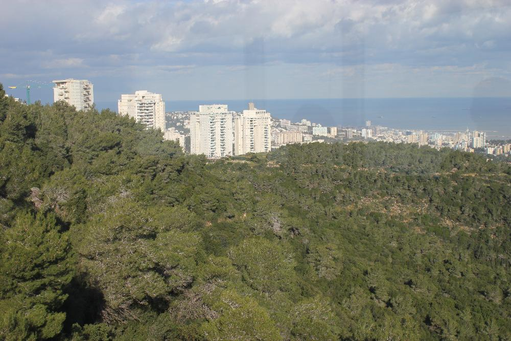 A view of the city from far away with green trees and white buildings